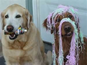 dogssillystring