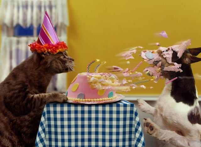 Funny-Dogs-Pictures-Birthday