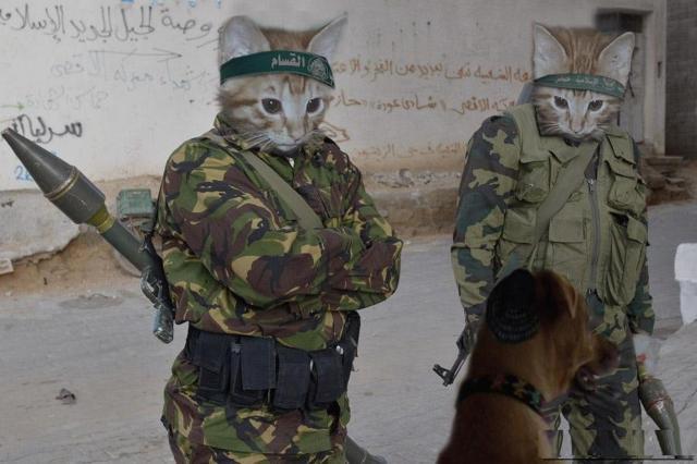 funny-cats-with-guns-4870