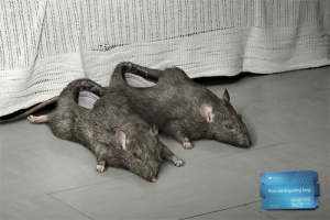 ratslippers