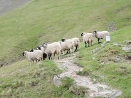 sheeppath - Copy