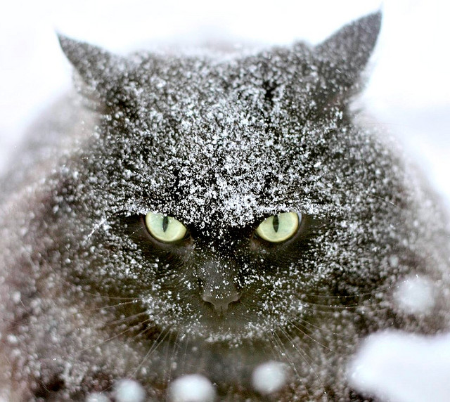 cat-in-snow