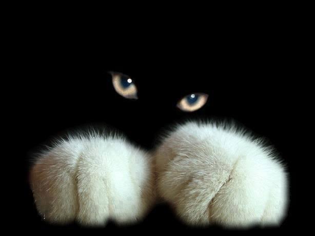 kittypawseyes