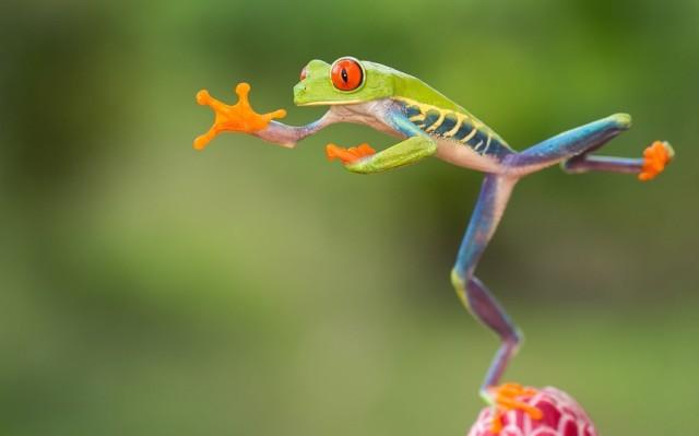 frog-jump_2794011k