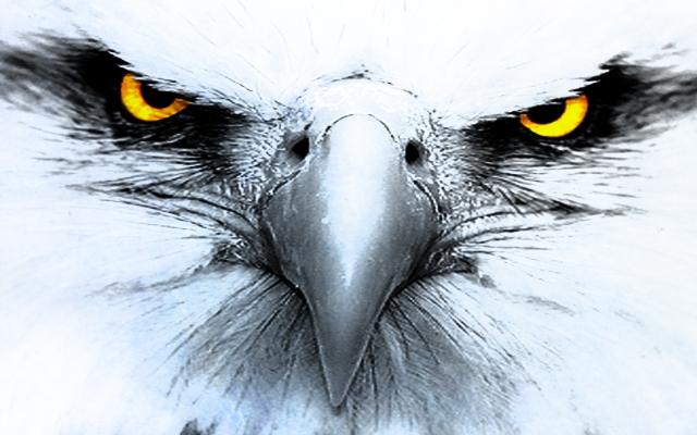 eagleeyes