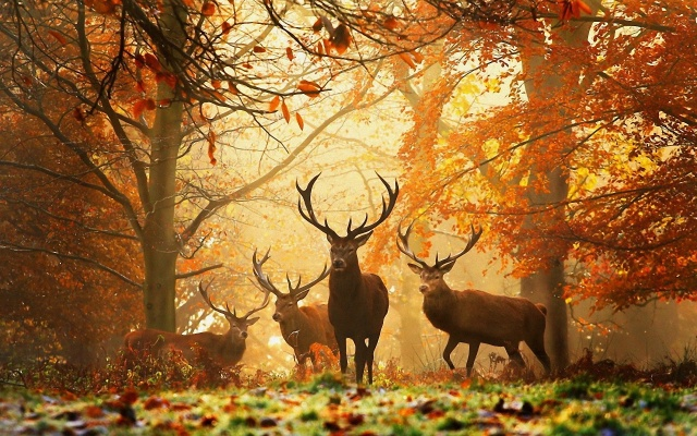 deers-at-autumn-forest
