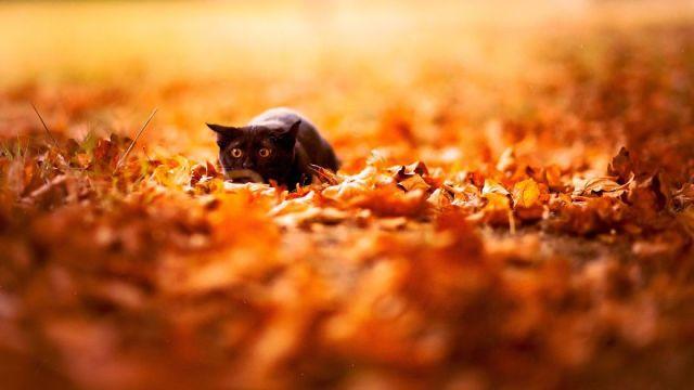 autumncat