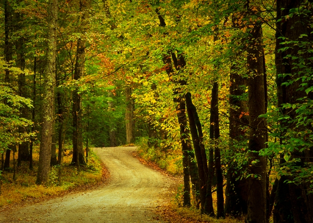 cades-cove-road-fall