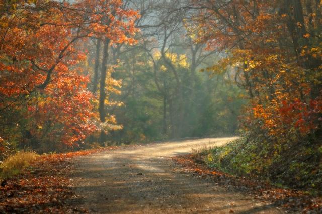 l-46-fall-on-an-ozarks-road