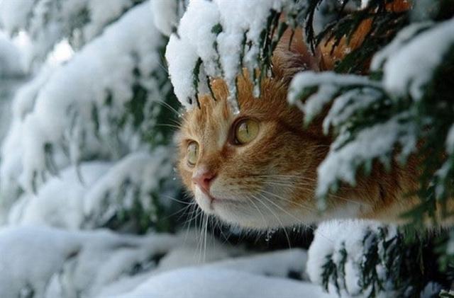 winter-cat-001