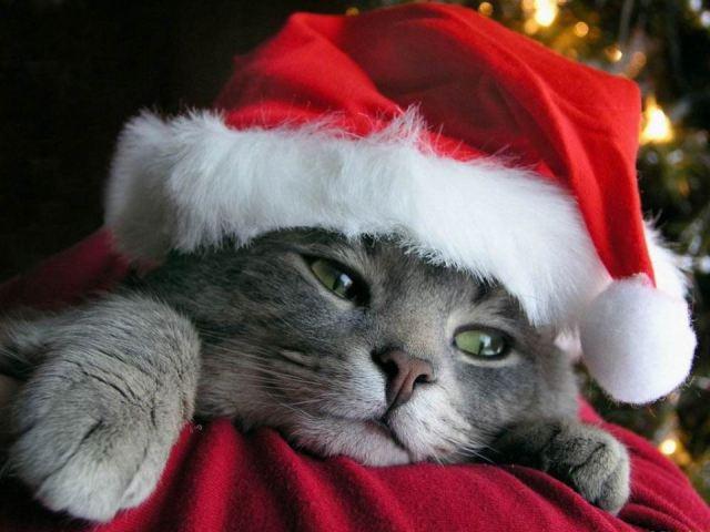 animal-christmas-3