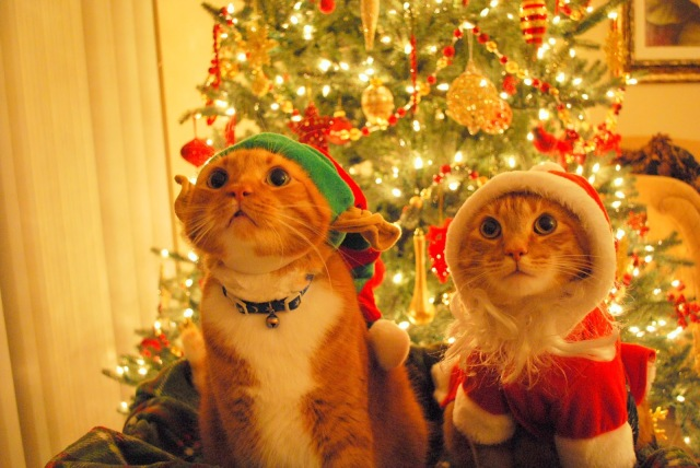 christmas-cats