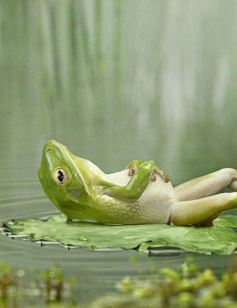 frog_zpsd09d7c7c
