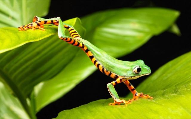 tree-frog2