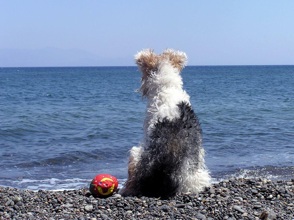It\'s Doggityday! | Stella\'s Place