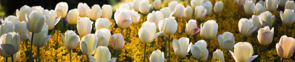 Cropped Spring Flowers Header Jpg Stella S Place